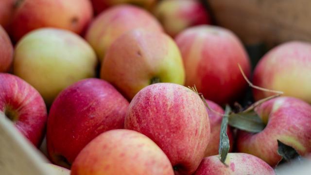 Pommes sur le marché de Cahors