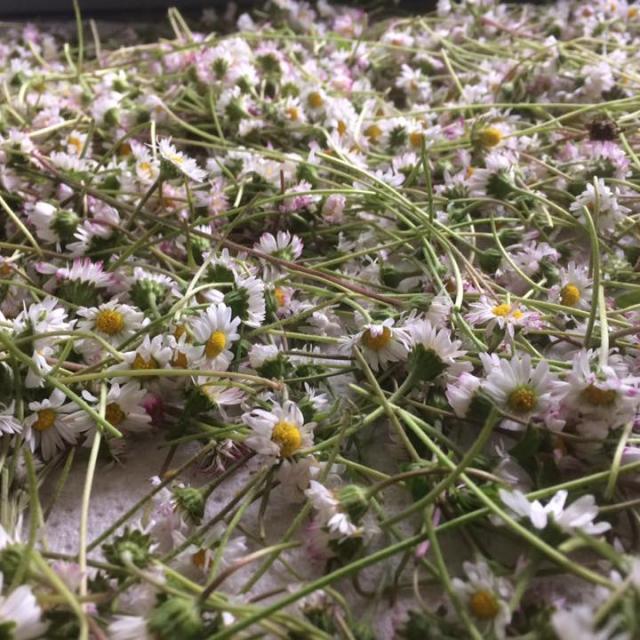 Fleurs - Ferme Vanadal