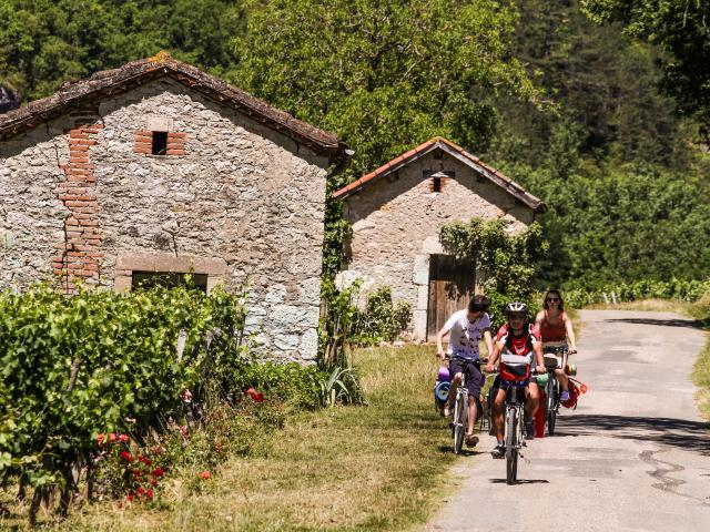 À vélo dans les vignes