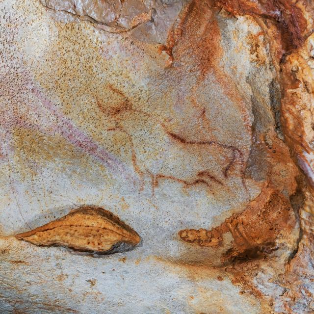 Aurochs - Grotte du Pech Merle