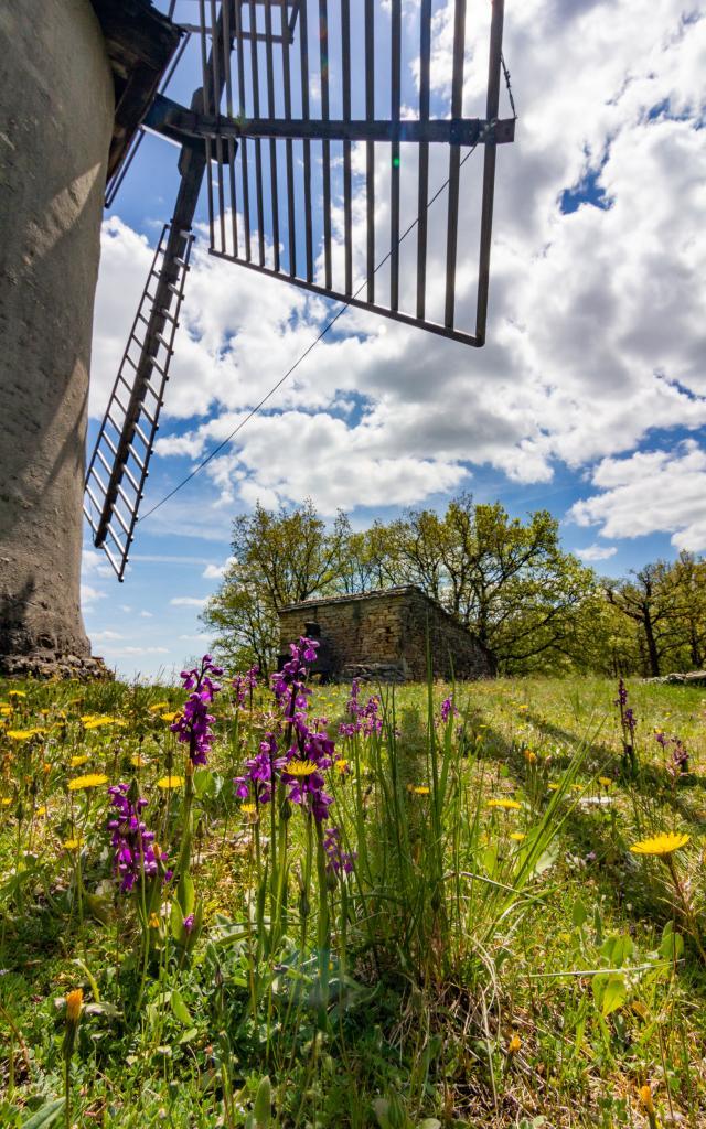 Orchidées et Moulin de la Bosse à Promilhanes