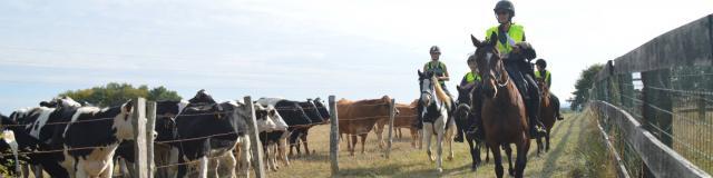 A la rencontre des vaches !