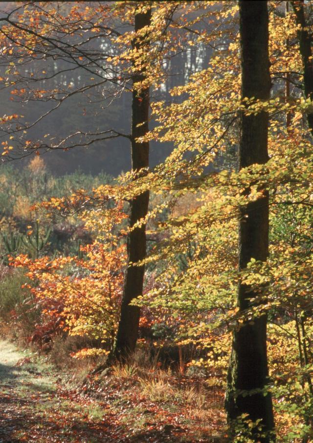 Perseigne en automne