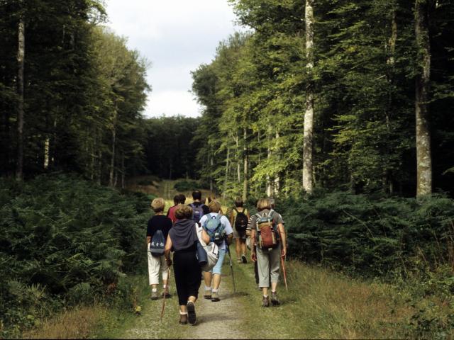 Randonnée pédestre en Forêt de Perseigne