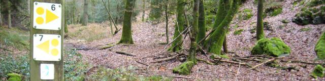 Sentier VTT en forêt de Perseigne
