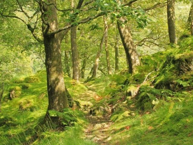 Forêt Domaniale De Perseigne