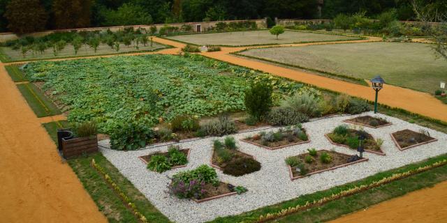 Aromatiques et cucurbitacées au Jardin Potager