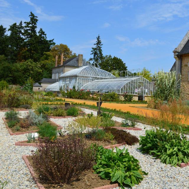Les plantes aromatiques du Jardin Potager