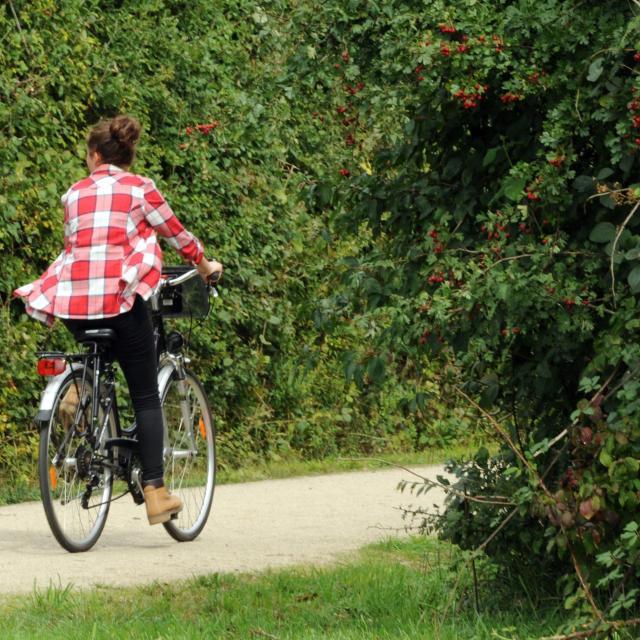 Cycliste sur la Voie Verte
