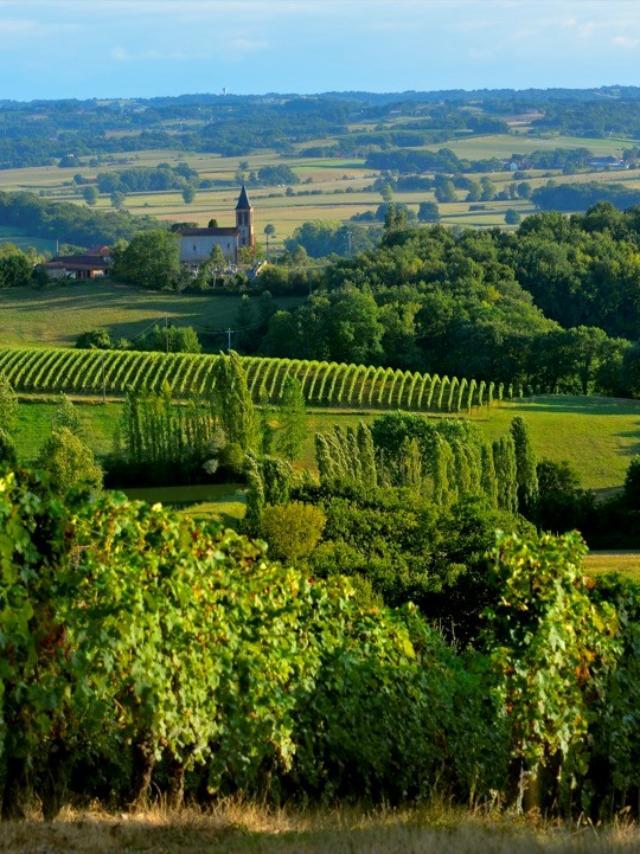 paysages-vignes-maison-des-vins.jpg