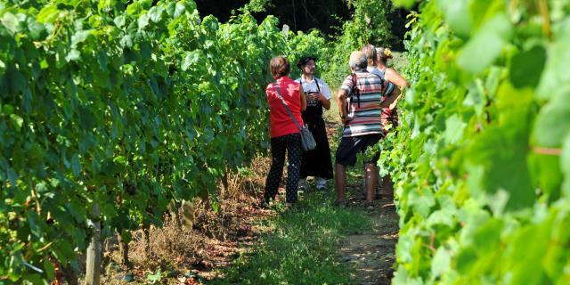 Vigne Groupe Patrice Thebault