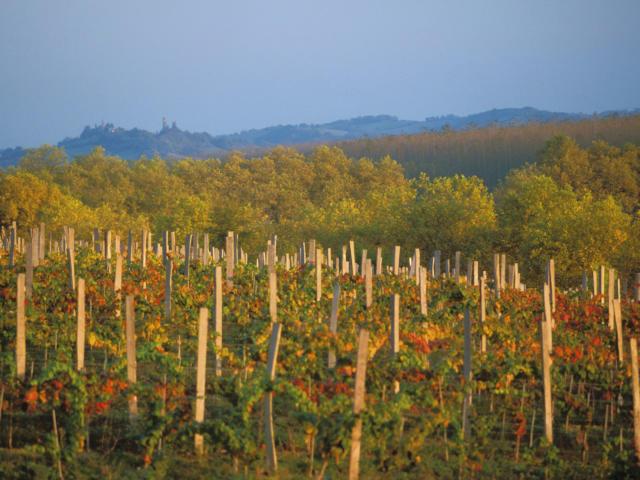 vignes-marciac-automne-michel-carossio.jpg