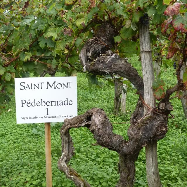 aoc-saint-mont-vignes-classes-1-mm.jpg
