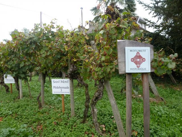 aoc-saint-mont-vignes-classes-3-mm.jpg