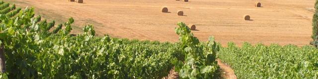 vignoble-saint-mont-vignes-j-jourdon.jpg