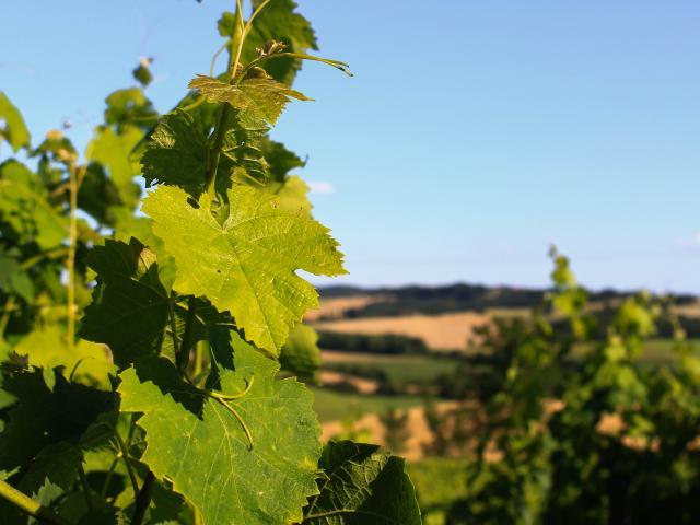 Vignes Paysage Marciac © Cso