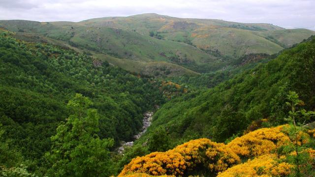 Pic de Finiels sur le Mont-Lozère