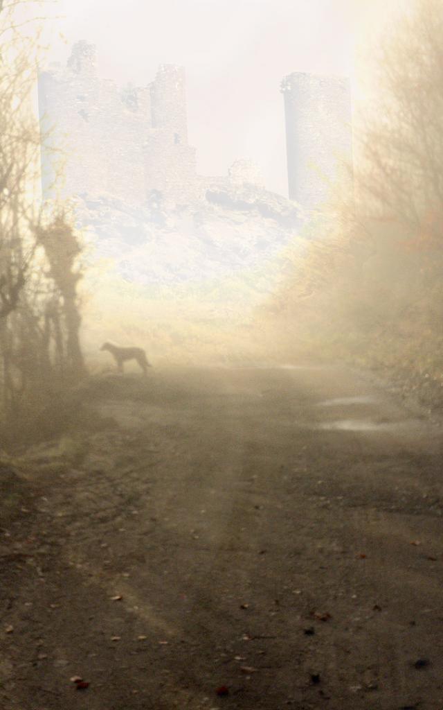 Forêt sous le brouillard