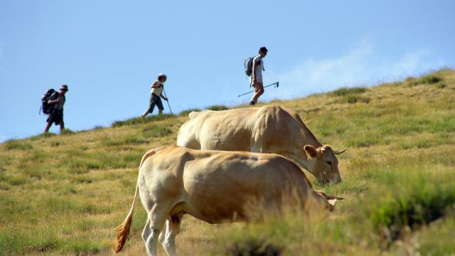 Rando Vache Phovoir (1)