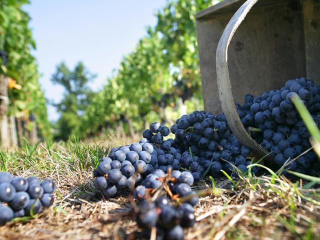 Vin Vendange Degustation Phovoir (9)