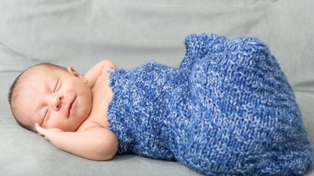 Baby Dodo©pixabay Stephanie Pratt