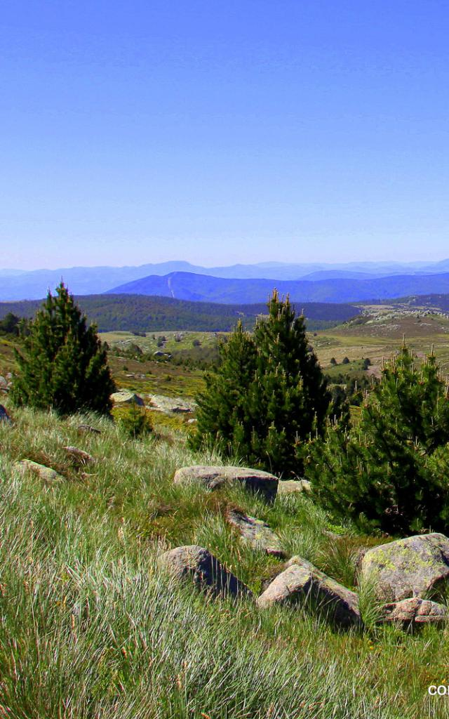 Rando Mt Lozere 2©chemins Francis