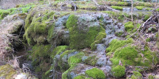 Sources Petrifiantes Zone Natura 2000 Barjac