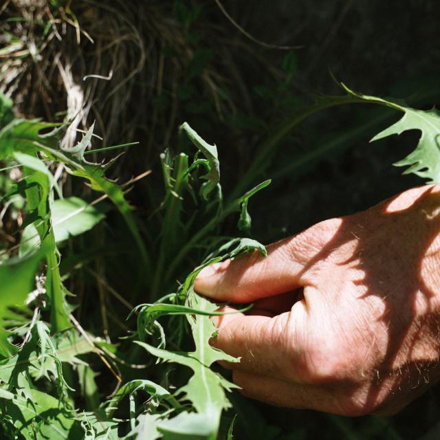 Cueillette Plantes