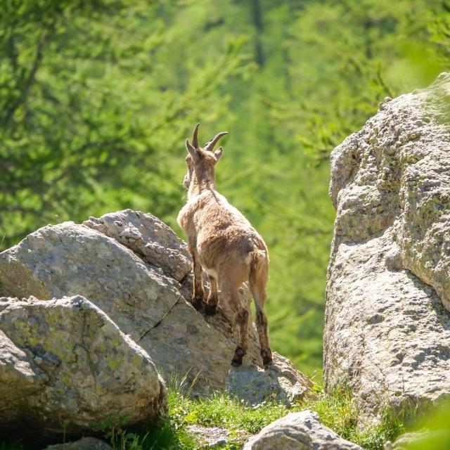 nature-biodiversite-parc-national-du-mercantour-isabelle-fabre.jpg
