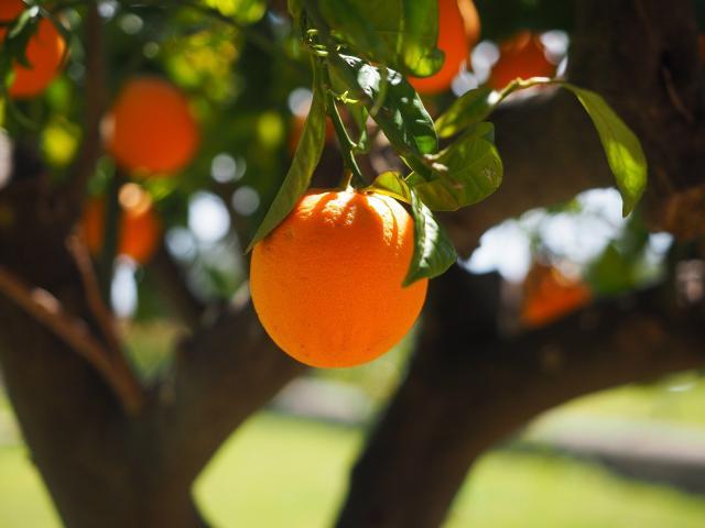 Orange 1117645 1920