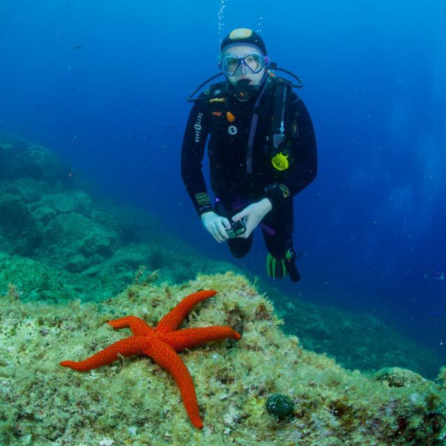Pratiquer Une Activite Plongee Sous Marine