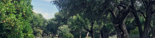 Parc Des Oliviers à Roquebrune-Cap-Martin