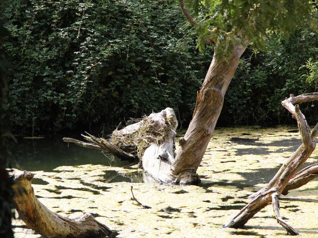 Balade Nature à Bostens