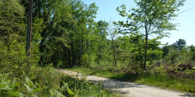 Forêt à Mazerolles