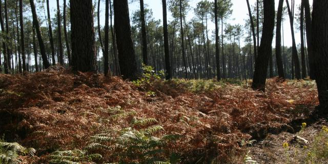Forêt à Gaillères