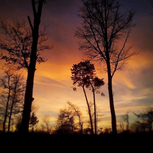 Coucher de soleil dans la forêt landaise