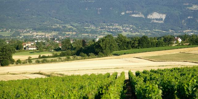 Vue sur les vignes depuis les hameaux Saint-Julien-en-Genevois