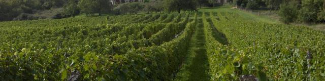 Vignoble Cote de Toul