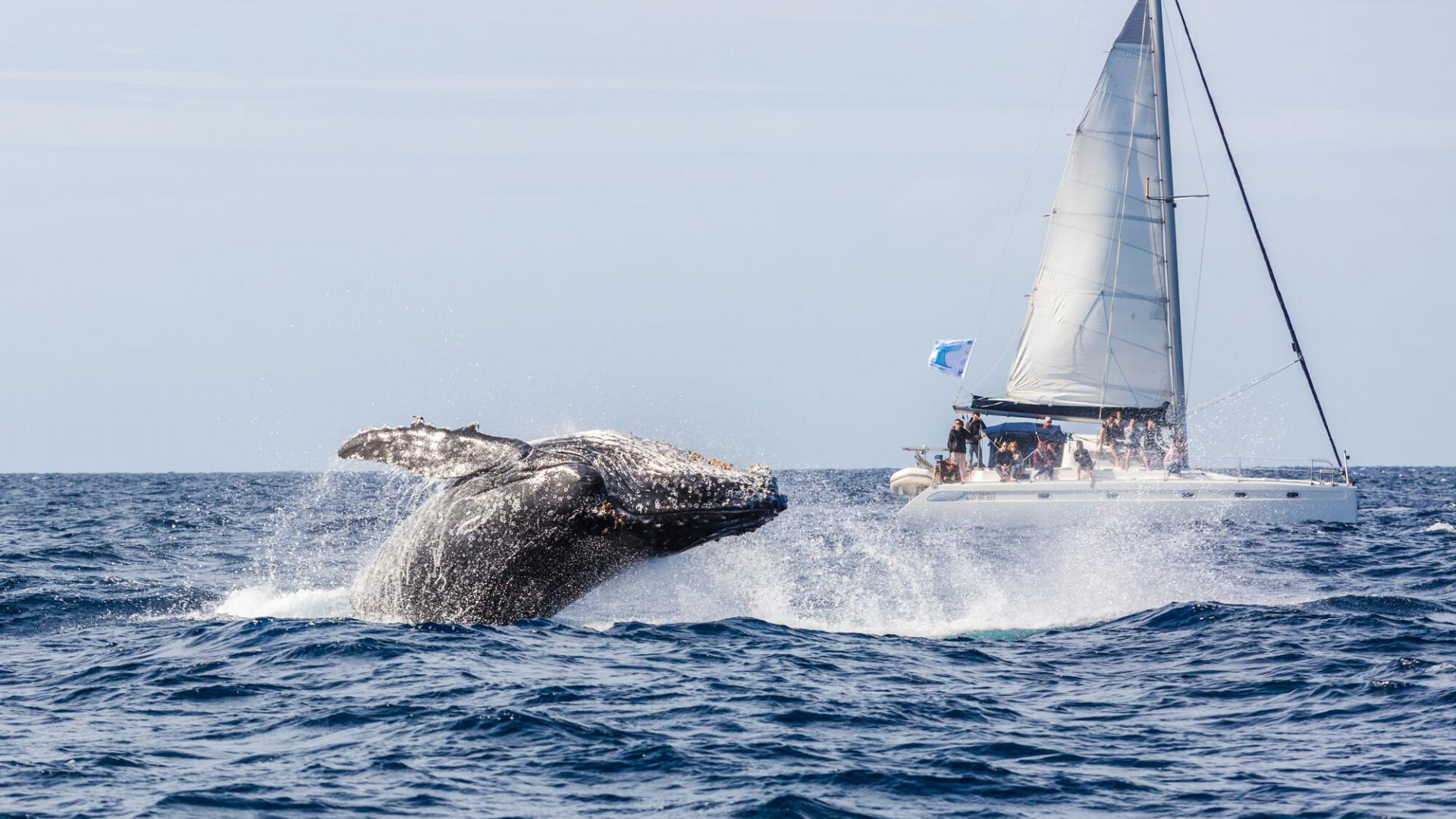 Baleine au large de Prony - Grand Sud