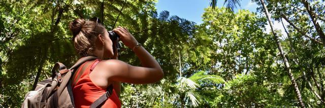 Birdwatching Parc des Grandes Fougères - Farino