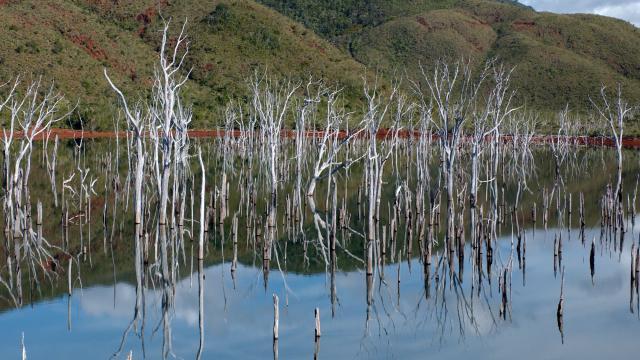 Parc Provincial de la Rivière Bleue - Yaté