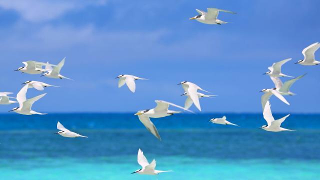 Oiseau - Nouvelle-Calédonie