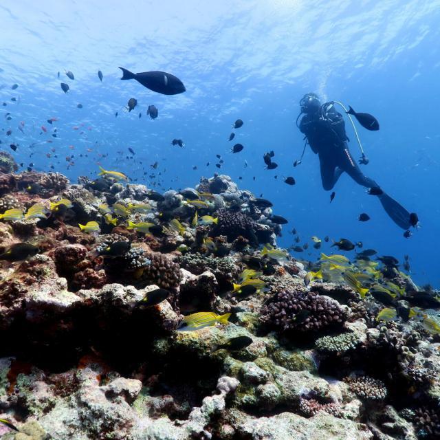Plongée sous marine - Nouvelle-Calédonie
