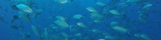 Plongée Sous Marine - Nouméa