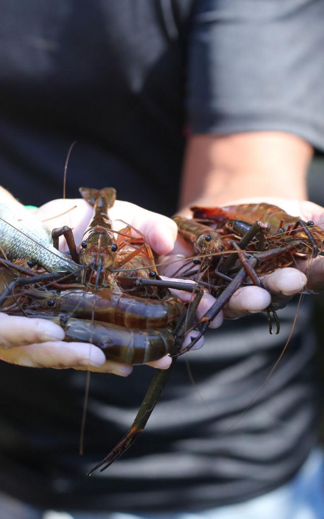 Pêche crevettes - Nouvelle-Calédonie