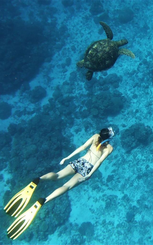 Tortue plongée en Nouvelle-Calédonie