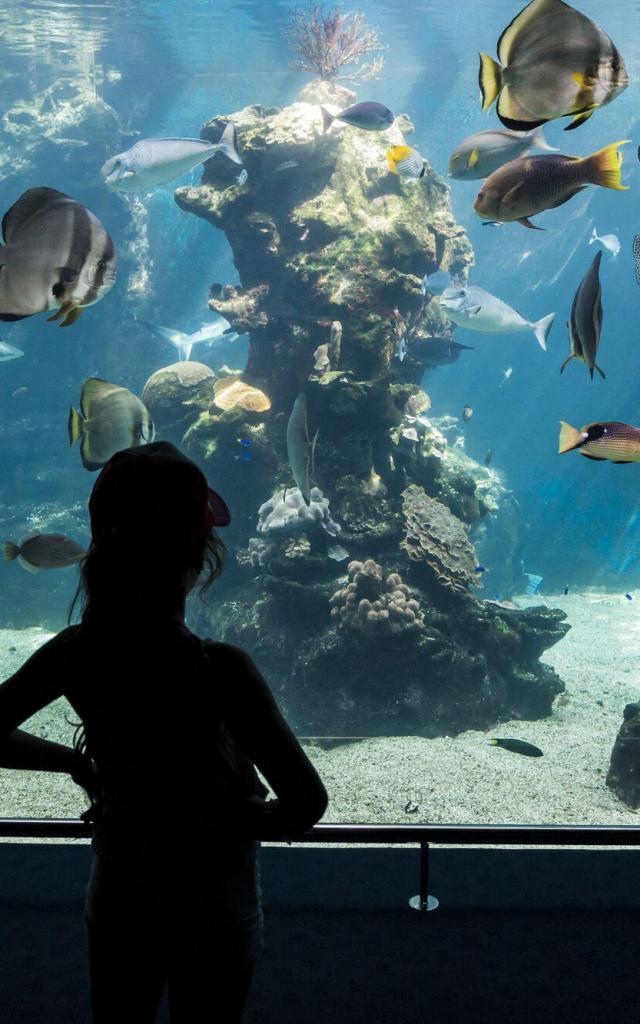 Aquarium des Lagons - Nouméa