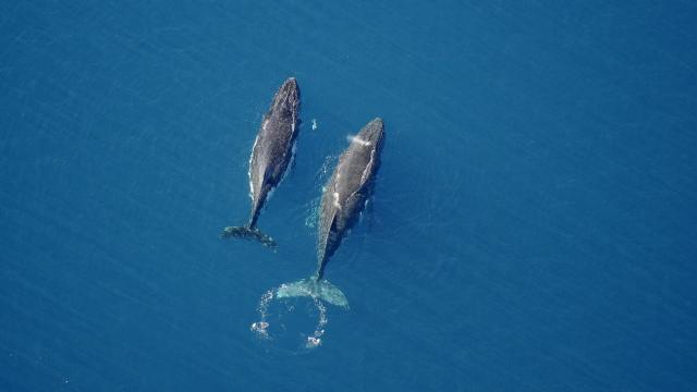 Baleine - Yaté