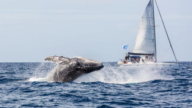 Observation des baleines - Yaté