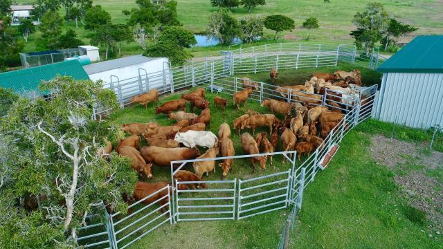 Station d'élevage - La Foa